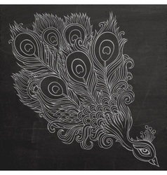 Decorative ornamental peacock chalkboard vector