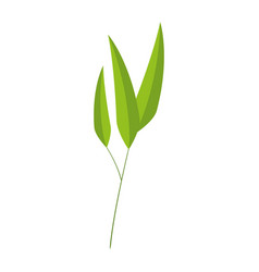 bamboo leafs isolated icon vector image vector image