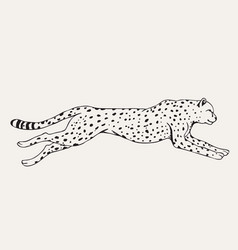 Runing leopard hand drawn vector