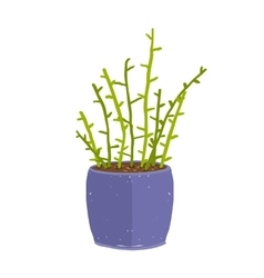 Green indoor leafy plant with stems in blue pot vector