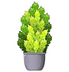 A decorative houseplant vector