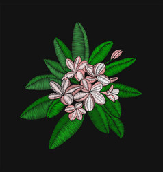 flowers embroidery frangipani and leaves plumeria vector image