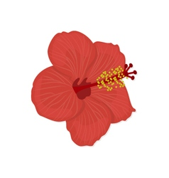 Hawaiian hibiscus flower vector