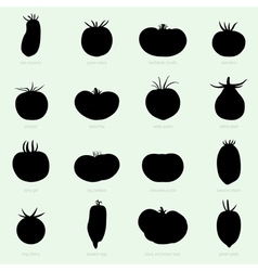 Different sorts of tomatoes vector