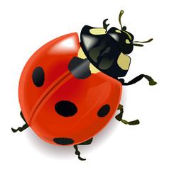 red ladybug vector image