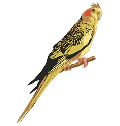 Mottled yellow cockatiel vector