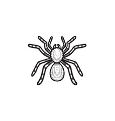Spider tarantula hand drawn sketch icon vector
