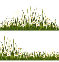 Wild flower meadow vector image