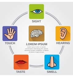 Five human senses smell sight hearing taste vector