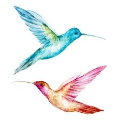Watercolor colibri bird vector