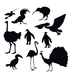 Exotic birds silhouettes vector