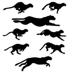 wildcats set vector image