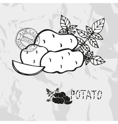 Hand drawn whole and sliced potatoes vector