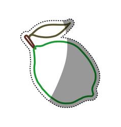 citric lemon fruit vector image vector image