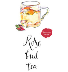 cup of rose bud tea vector image