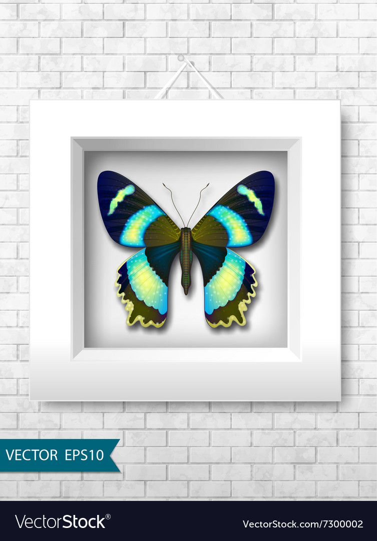 Butterfly in a white frame on a brick wall vector