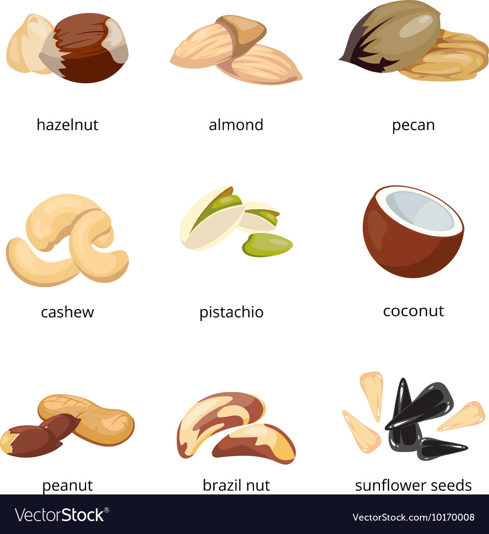 Cartoon nuts set vector