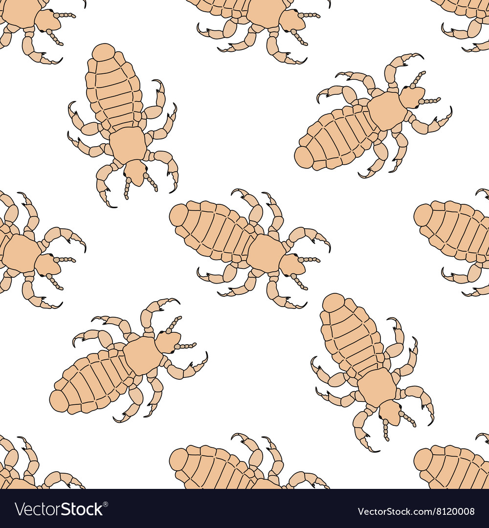 Seamless pattern with head human louse pediculus vector