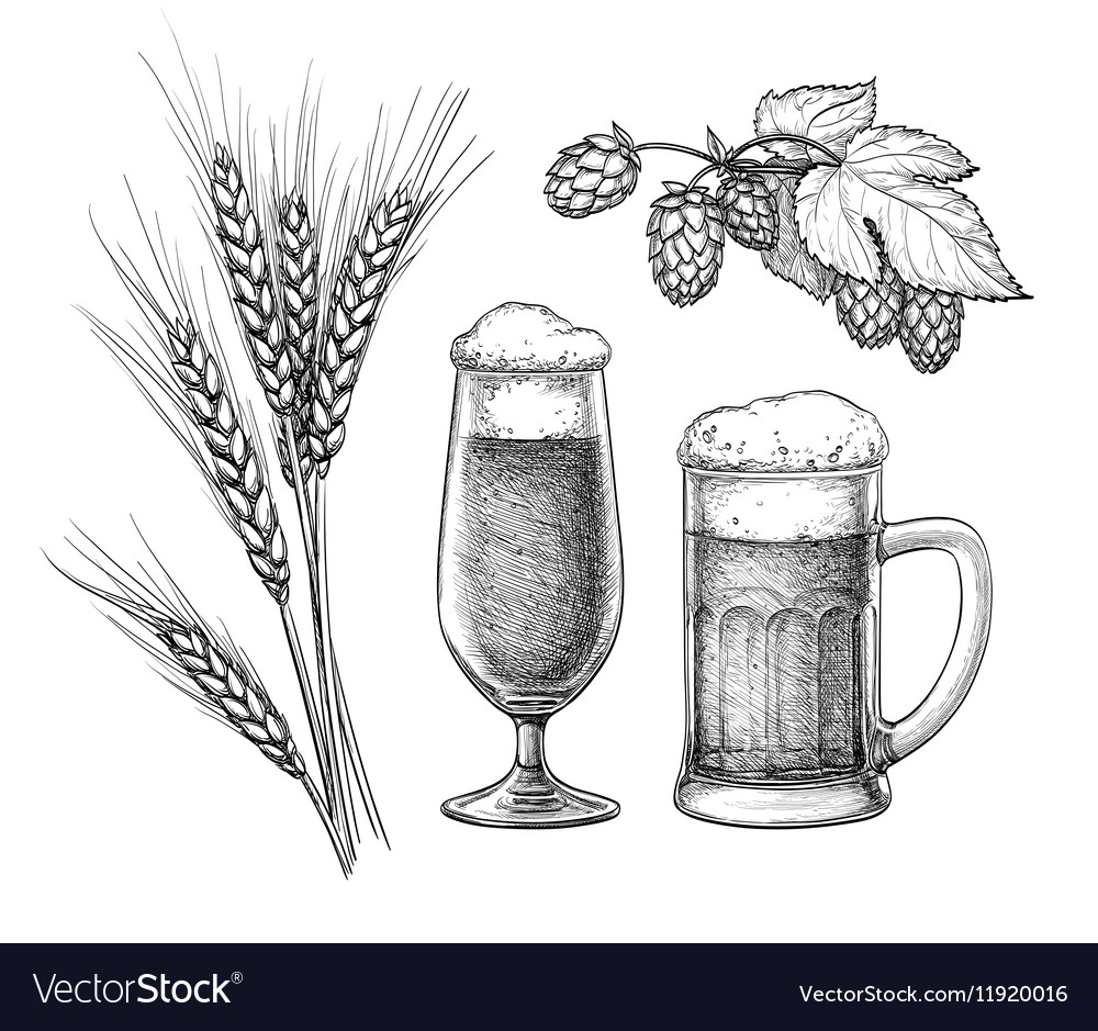 Hops malt beer glass and beer mug vector