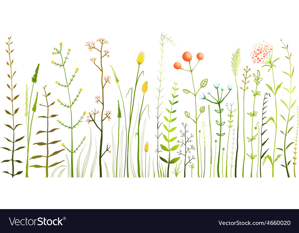 Wild field flowers and grass on white collection vector