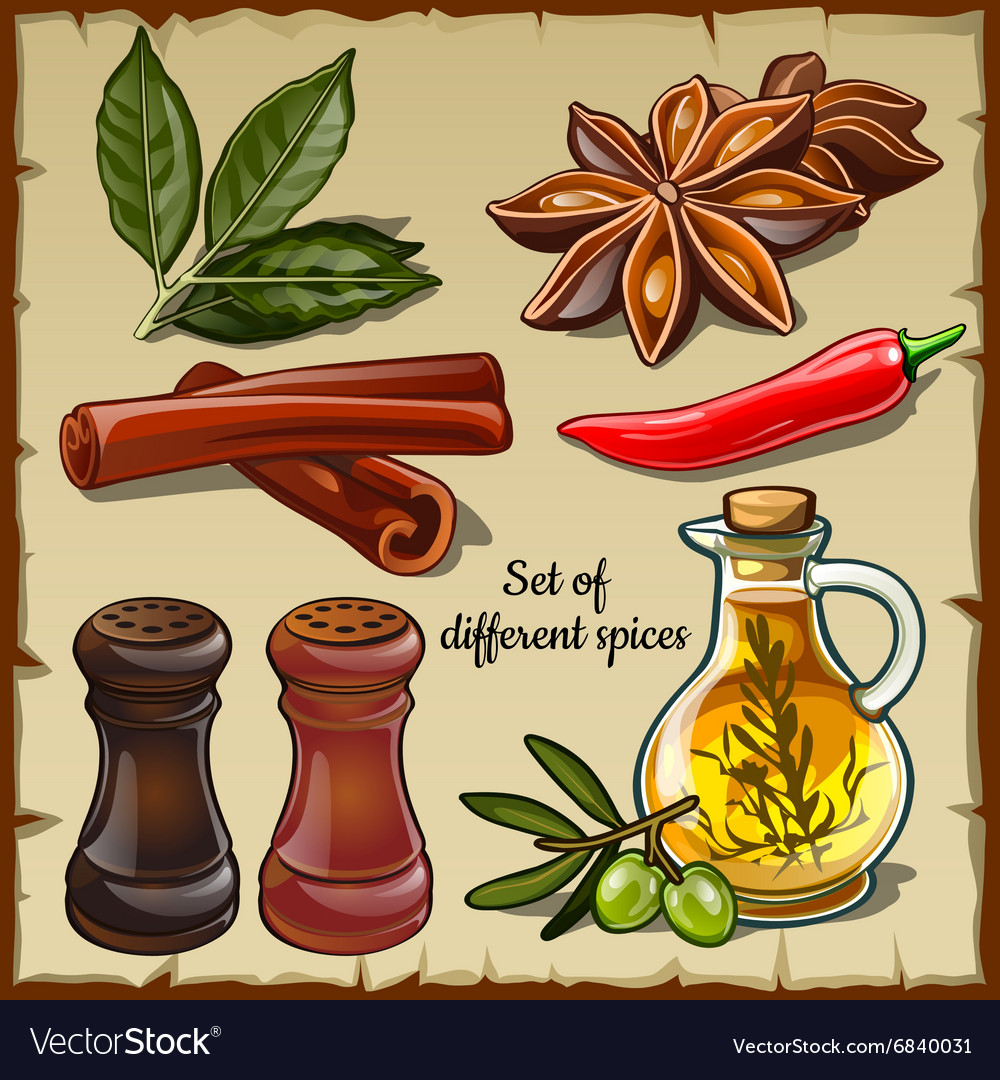 Set of different spices of the chef and foodie vector