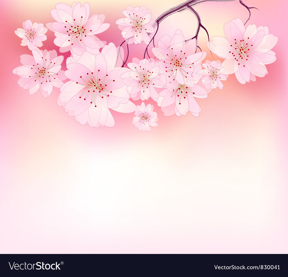 Beautiful sacura spring vector