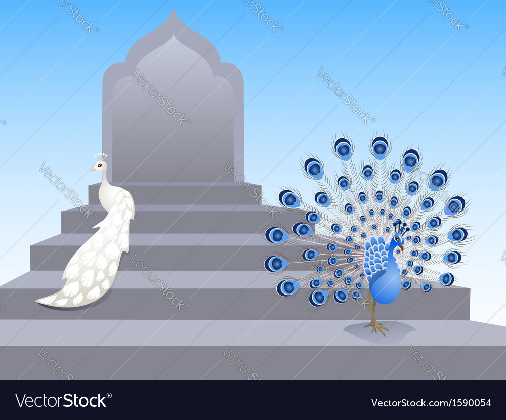 Peacocks vector