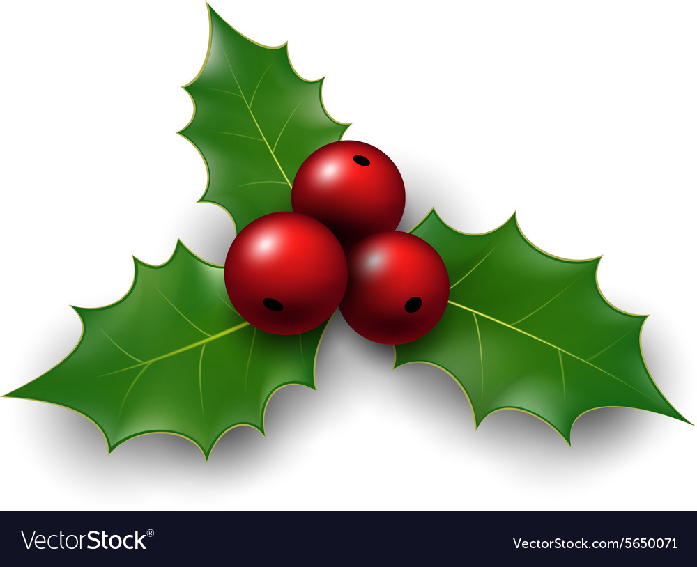 Twig of holly with berry and leaves vector