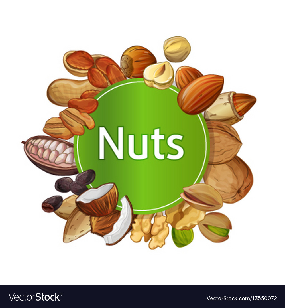 Various nuts round isolated composition vector