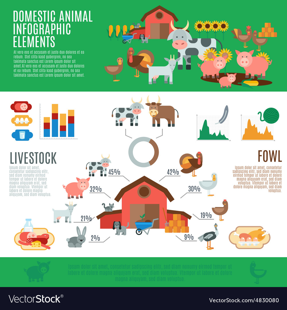 Domestic animals infographics vector