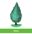 Fir tree cartoon icon vector image