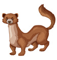 Wild mongoose with brown fur vector image