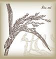 rice hand drawn vector image