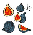 colorful set of hand drawn figs vector image vector image