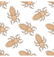 Seamless pattern with head human louse Pediculus vector image
