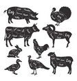 for butcher shop cutting lines of vector image