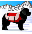 newfoundland dog lifesaver in mountains vector image