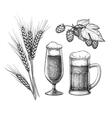 Hops malt beer glass and beer mug vector image