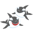 Killer whales vector image