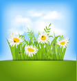 Spring nature background with camomiles ladybugs vector image