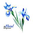 Beautiful watercolor paint blue irises vector image