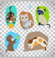 cute cats set on transparent background vector image