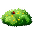 Nature design with bush and bug vector image