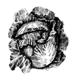Cabbage with leafs cabbage head half of cabbage vector image