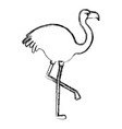exotic flamingo tropical bird vector image