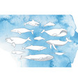 different whale set hand drawn doodle vector image