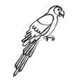 exotic parrot tropical bird vector image
