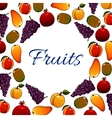 fruits banner with round space for text vector image