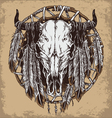 Hand drawn cow skull and feathers vector image