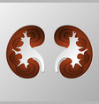 the brown silhouette of the kidney is carved on vector image